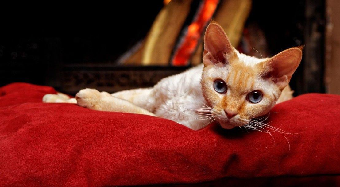 Katzenpsychologie Grunde Fur Protestpinkeln Erkennen Mit Bildern