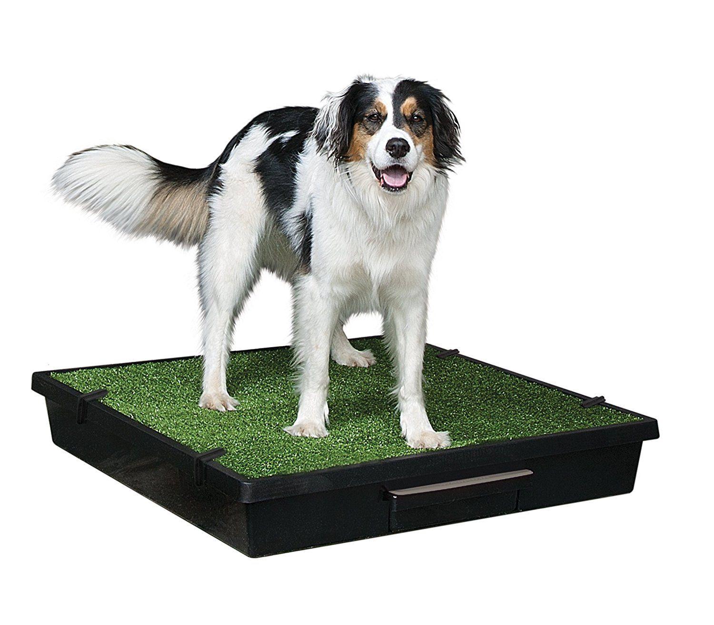 Amazon Com Petsafe Pet Loo Portable Dog Potty Alternative To Pee Pads Large Litter Boxes Pet Supplies Dog Potty Dog Litter Box Indoor Dog
