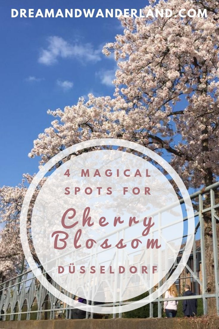 Hanami is a Japanese tradition to enjoy blooming of the cherry trees (Sakura). In Japan, people usually go outside in parksor wherever else throughout the countryside in Japan. So they do in Düsseldorf, Germany! Enjoy Cherry Blossom in Düsseldorf and find the best spots to see Cherry Blossom!  #travel #germany #solo #sakura #hanami
