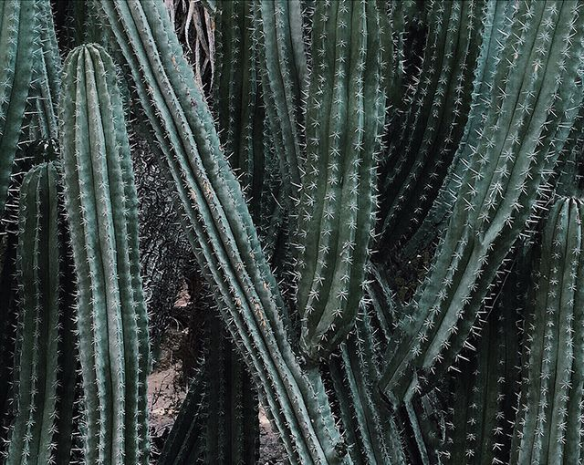 Pin By Kelli Boydston On F L O R A Pinterest Palm Springs And Palm - Palm springs acura
