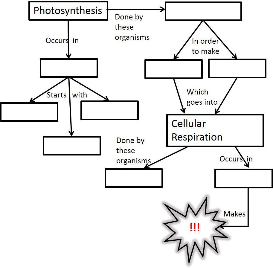 Cell Concept Map Worksheet Answers Cell Respiration