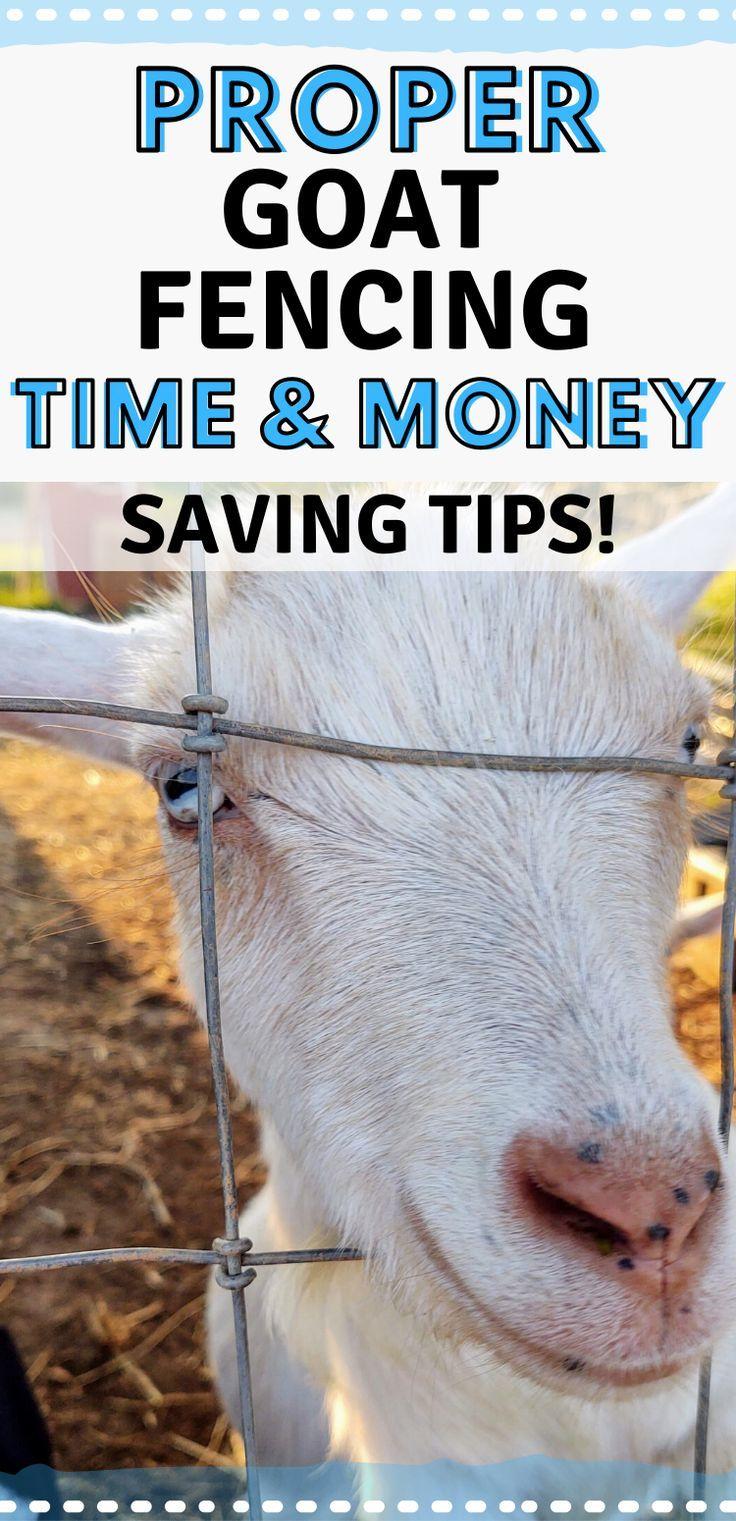 Proper Goat Fencing - Time & Money Saving Tips! - Mranimal ...