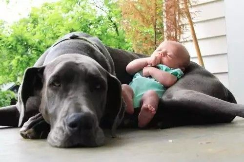 Why Babies Need Dogs Dogsomenet Baby Needs List Pinterest - 30 cutest pictures ever babies posing animals