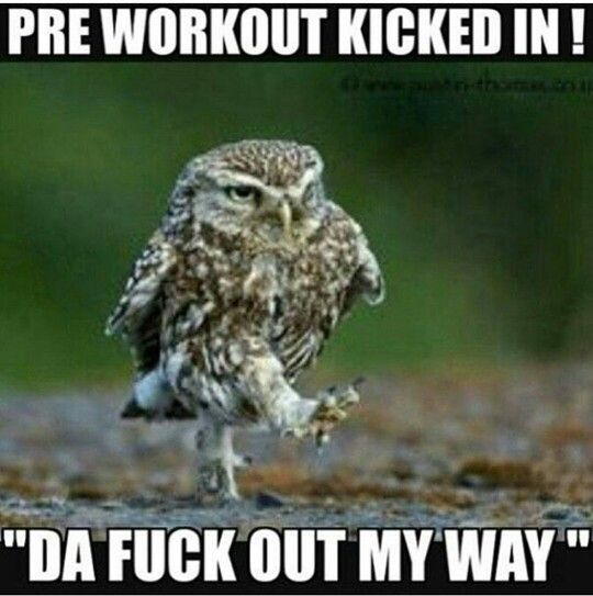 Pin By Squirrel On Fit Ring My Bell Gym Memes Funny Fitness Quotes Funny Gym Humor Gym Humor