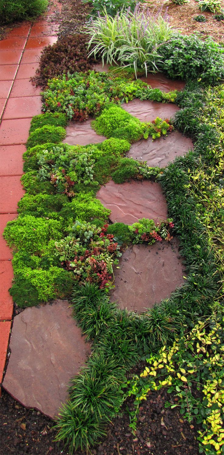 landscaping ideas sedums are decorative between paving stones