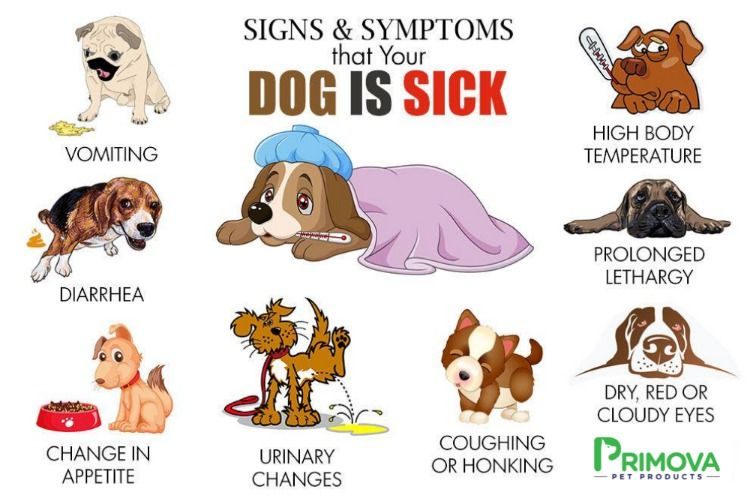 Primova How To Tell If Your Dog Is Sick Dog Sick Signs