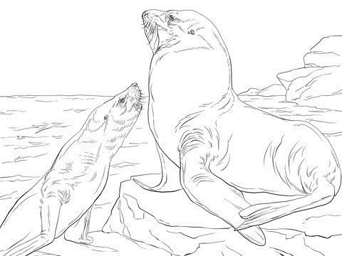 Steller Sea Lions Coloring Pages For Kids Ekh Printable Sea Lions Coloring Pages For Kids