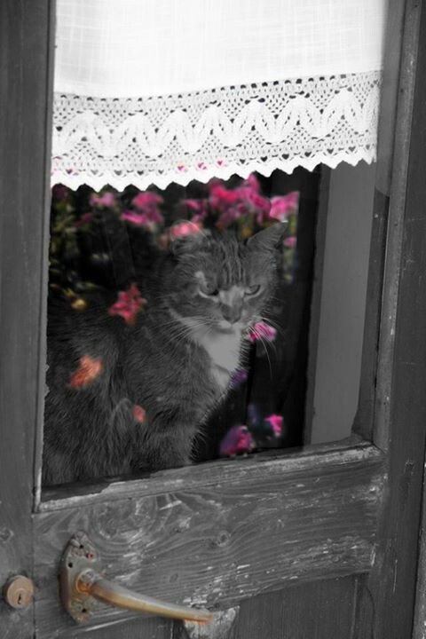 Such a cutie in the window... ♥♥