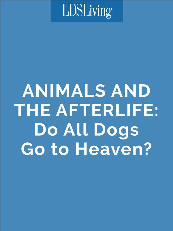 Animals and the Afterlife Do All Dogs Go to Heaven? Dog