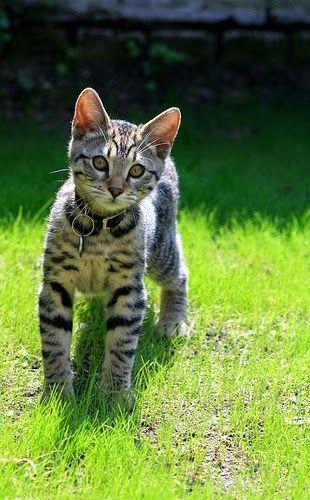 Staande Kitten In De Tuin