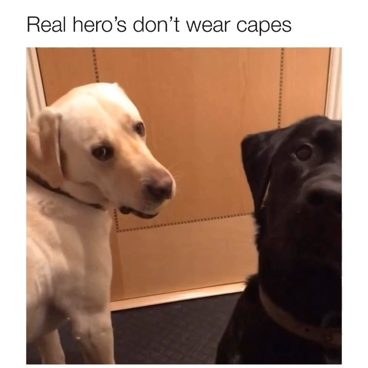 @yourdog