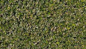 Textures Texture Seamless Green Hedge Texture Seamless 13105