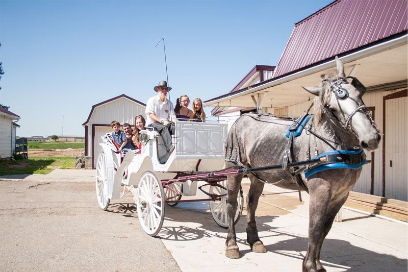 Blue gate carriage co shipshewana in take a carriage