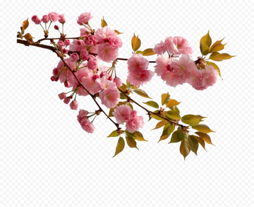 Real Flowers Real Flowers Flower Backgrounds Flowers