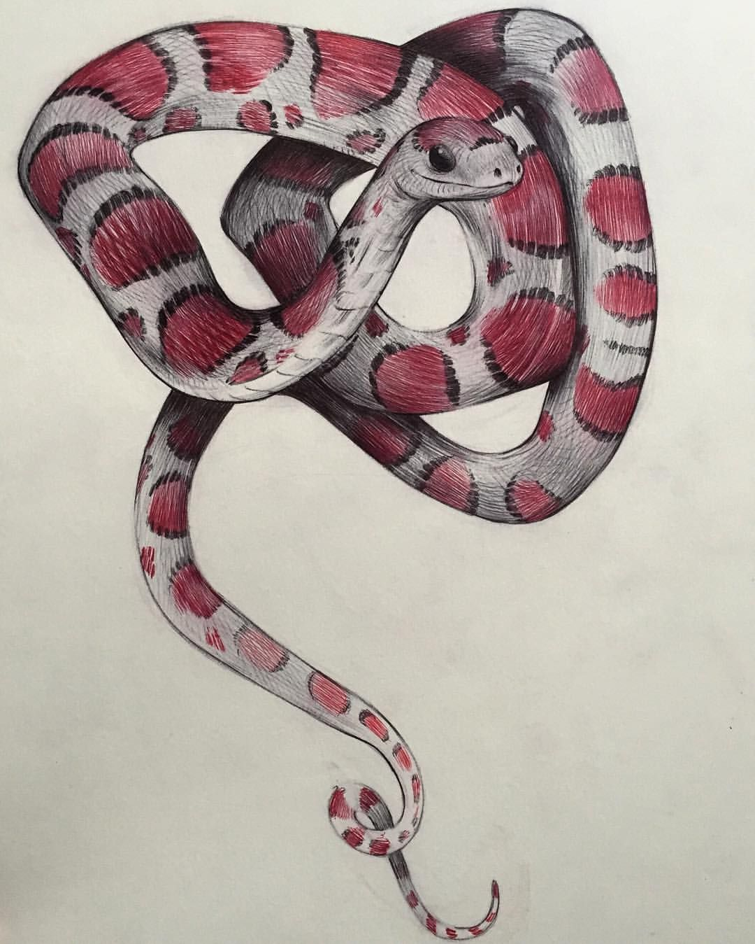 Red touch yellow, kill a fellow « Manolo for the Big Girl |Milk Snake Humor