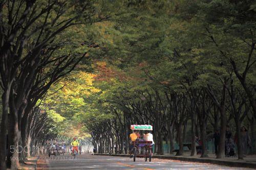 October sketch @ 仁川大公園 by ykd001  autumn tree road fall wood outdoors 가을 Korea Canon South Korea Incheon October 인천대공원 10월 ykd001