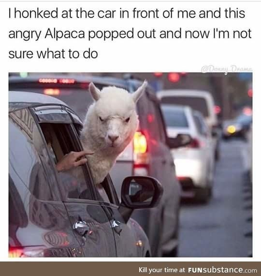 Photo of 15 Hilarious Alpaca Memes That Will Have You Laughing All Day