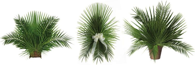 Wedding Church Ceremony Decoration With Palm Leaves Google Search