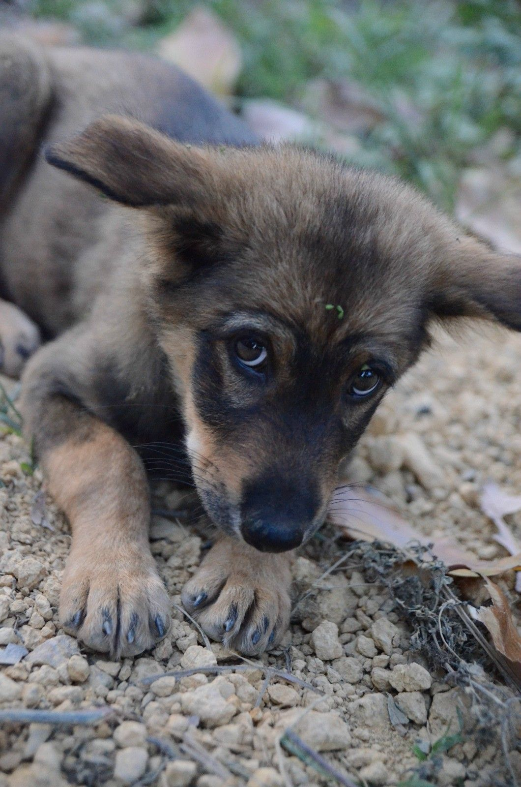 Puppy fear periods reddit