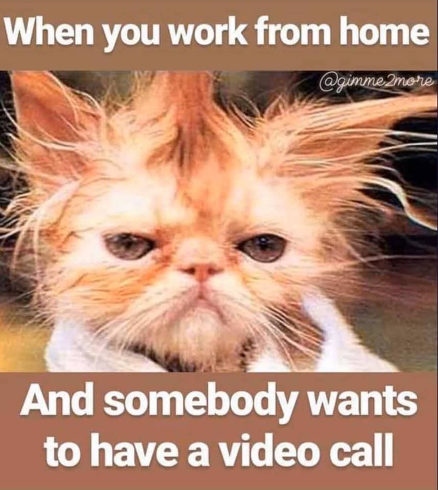 When You Work From Home And Somebody Wants To Have A Video Call In 2020 Working From Home Meme Working From Home Funny Animal Memes