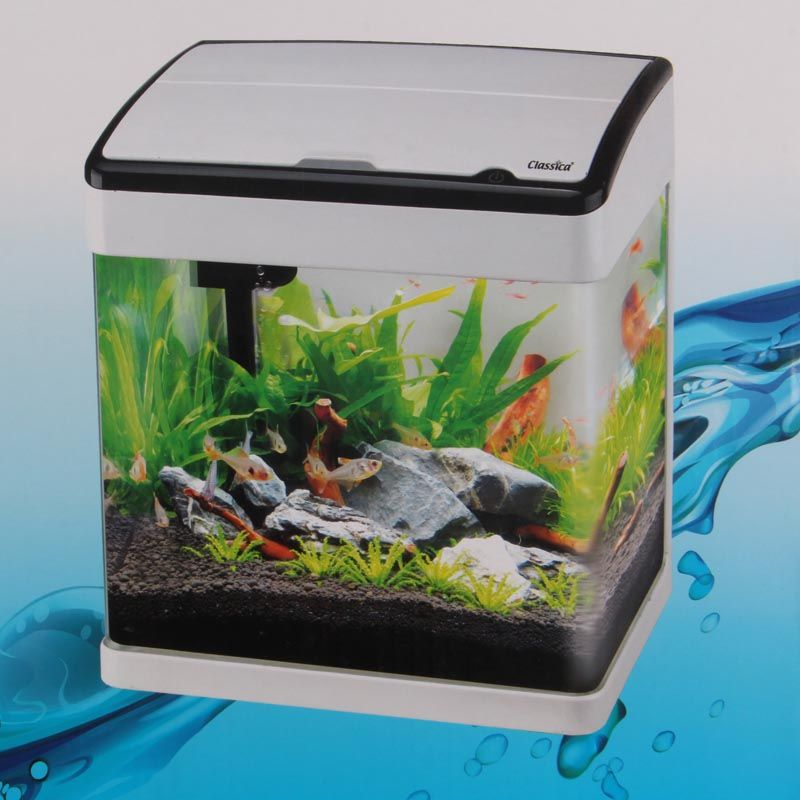 Small aquarium tropical fish aquarium fish pinterest for Small fish tank
