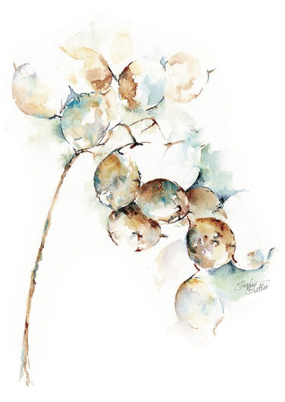 Honesty Beautiful Floral Watercolour Fine By Stephiebutlerstudio