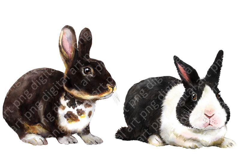 Rabbits Watercolor Clipart Pets Farm Animals Rabbit Breeding Animal By Evgeniia Grebneva Painting Thehungryjpeg Com In 2021 Animal Clipart Pets Watercolor Clipart