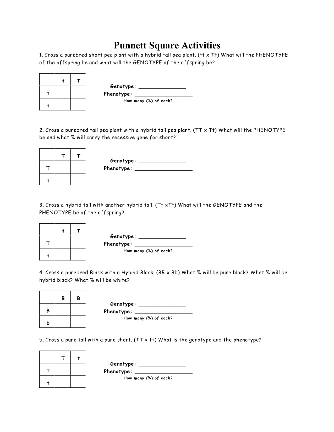 Pea Plant Punnett Square Worksheet Answers In