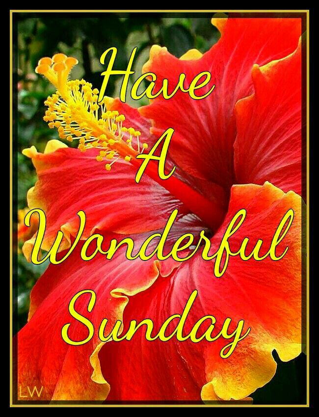Have A Wonderful Sunday Hibiscus Flower