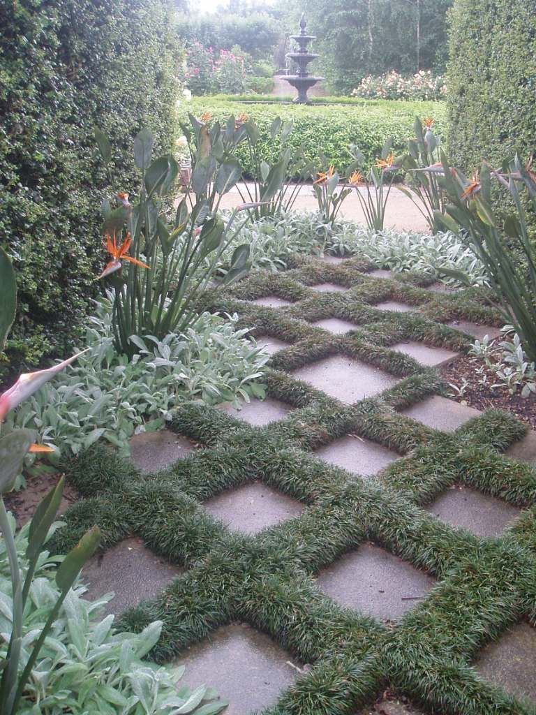 How to plant ground cover between pavers - Mondo Grass In Between Pavers