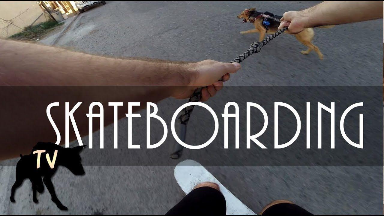 Sasha The Pitbull German Shepherd Mix Skateboarding Baja Dog