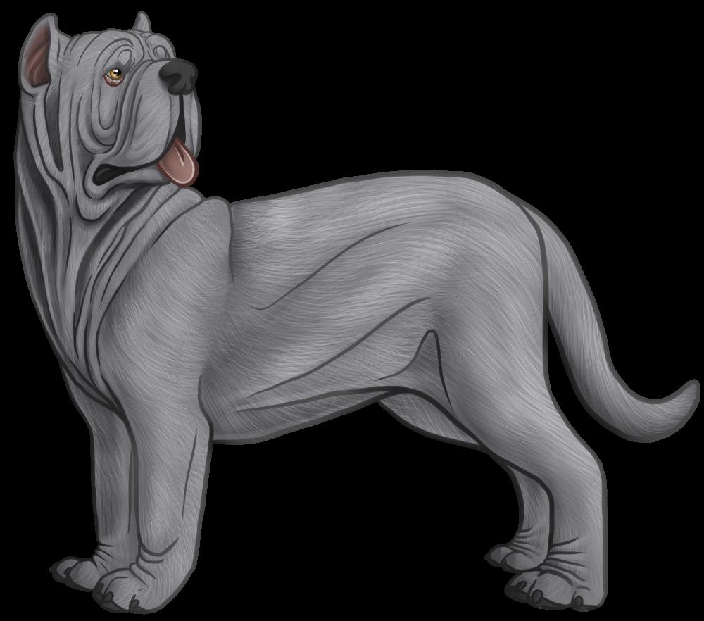 Neapolitan Mastiff Drawing Google Search Neapolitan Mastiffs Drawings Lion Sculpture