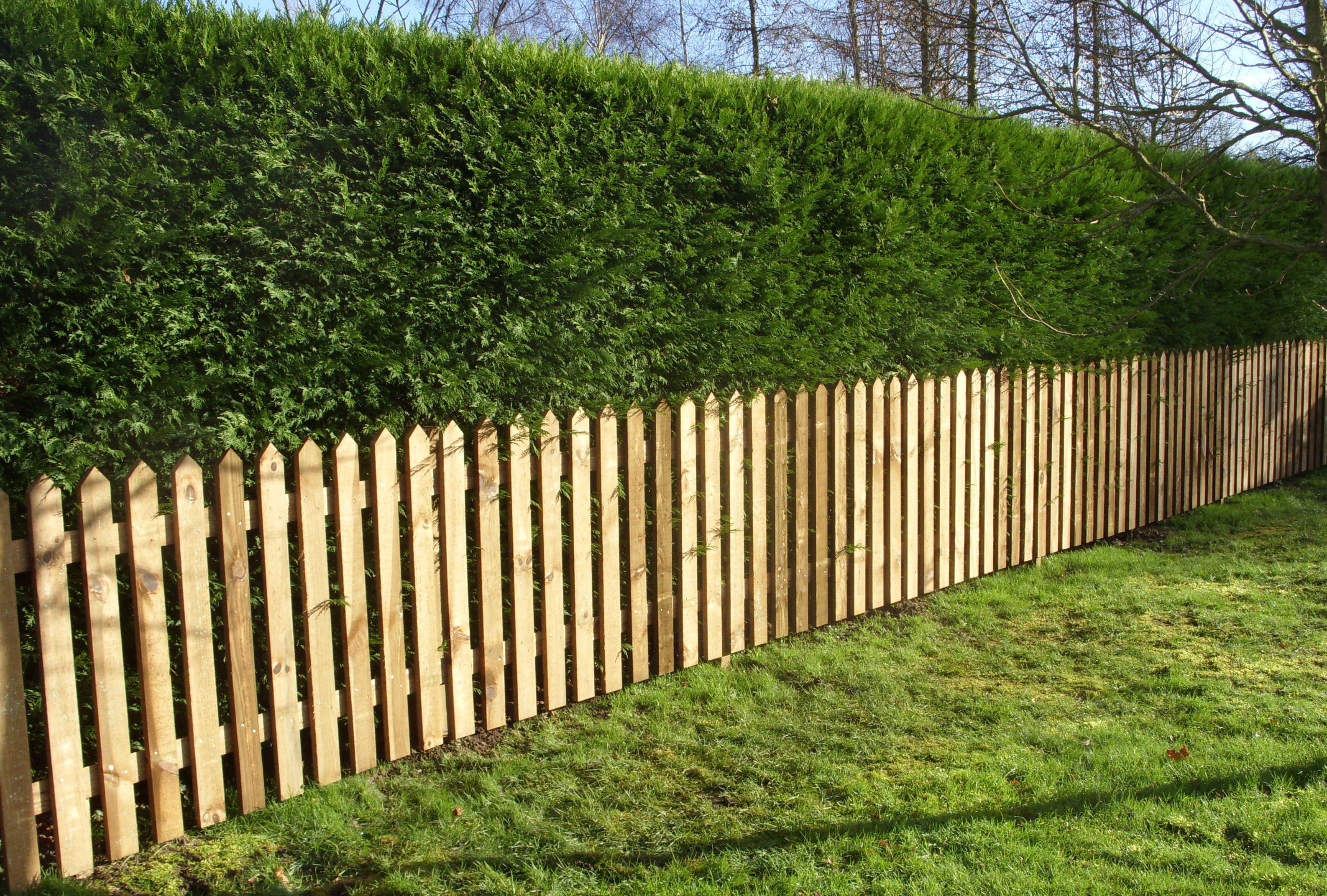 Dog Proof Garden Hedge - Google Search