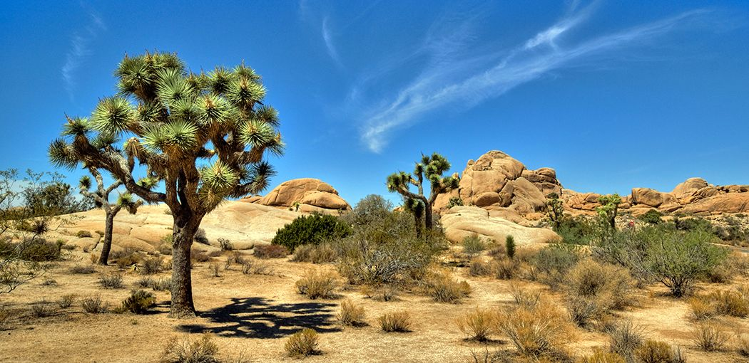 The Best Camping Near Los Angeles From Beachy Escapes To Mountain Treks And All Lakes Deserts In Between
