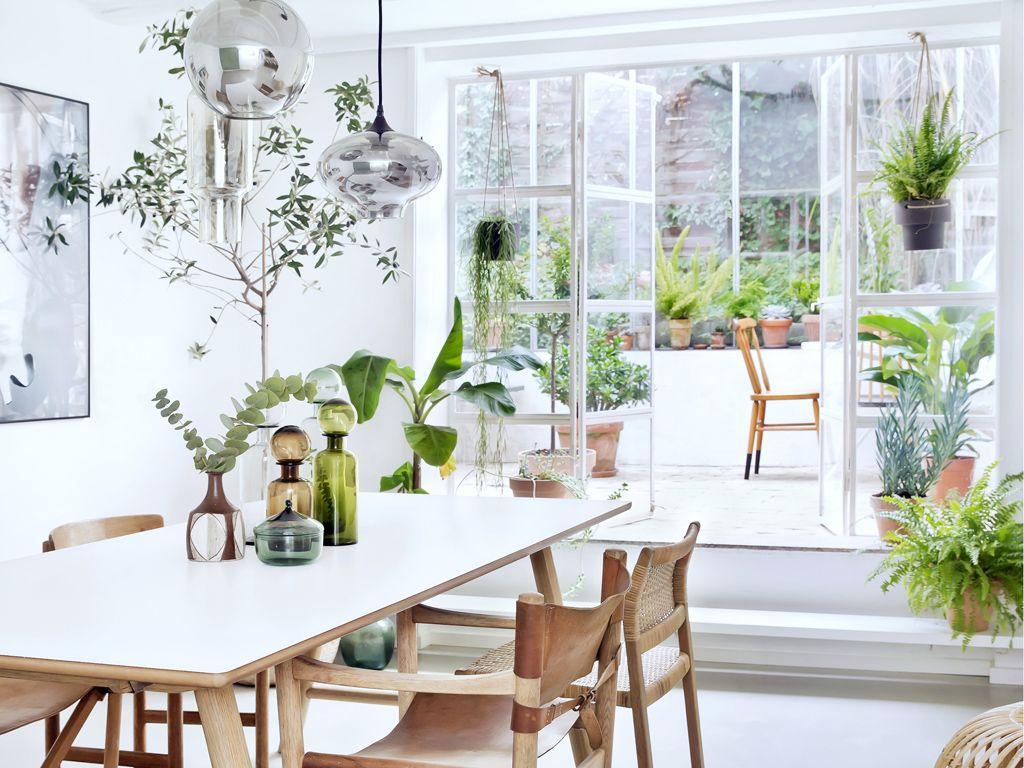 Giardino D Inverno Giapponese : Piante da appartamento come creare un giardino d inverno