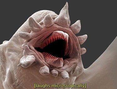 страшный микроб