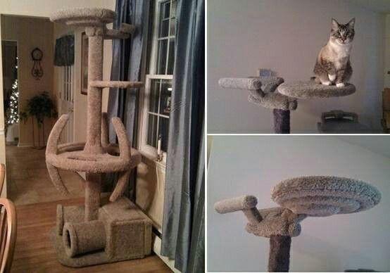 Star Trek cat post