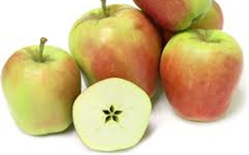 Ein Shemer Apple Tree 5 Gallon Fruit Tree Togogarden Gardening Fruittree Fruit Plants Apple Information Apple