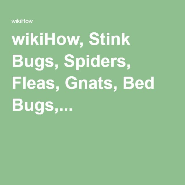 Wikihow stink bugs spiders fleas gnats bed bugs for How to keep spiders away from your bed