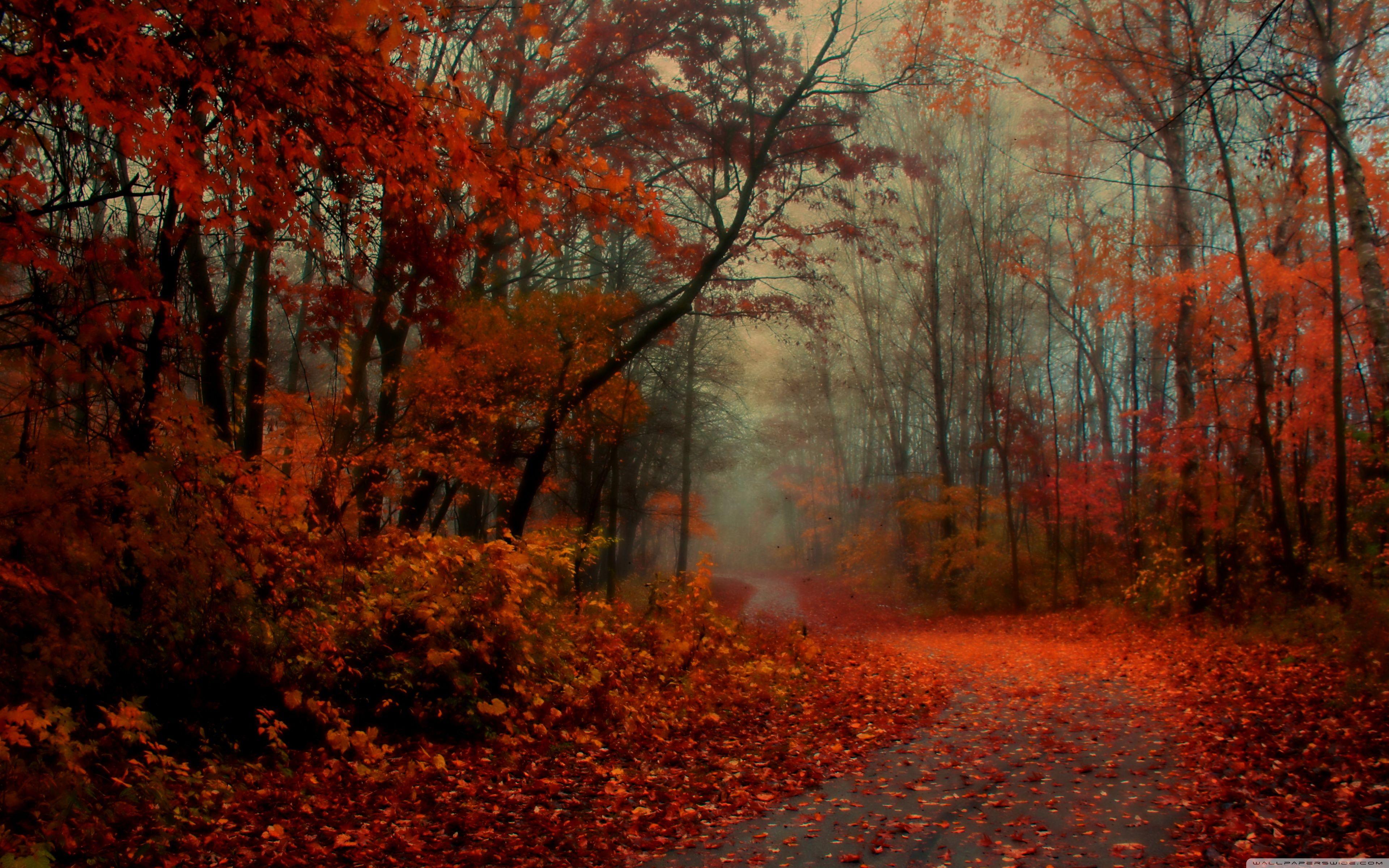 Misty Morning Walk HD Desktop Wallpaper Widescreen High