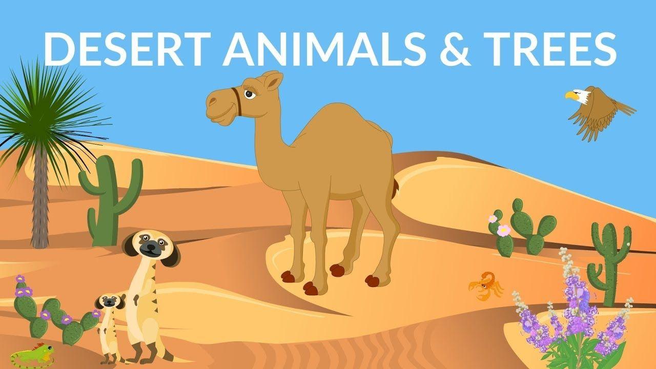 Desert Animals And Plants Desert Ecosystem Desert Video For Kids Youtube In 2020 Desert Animals Desert Animals Activities Desert Animals And Plants