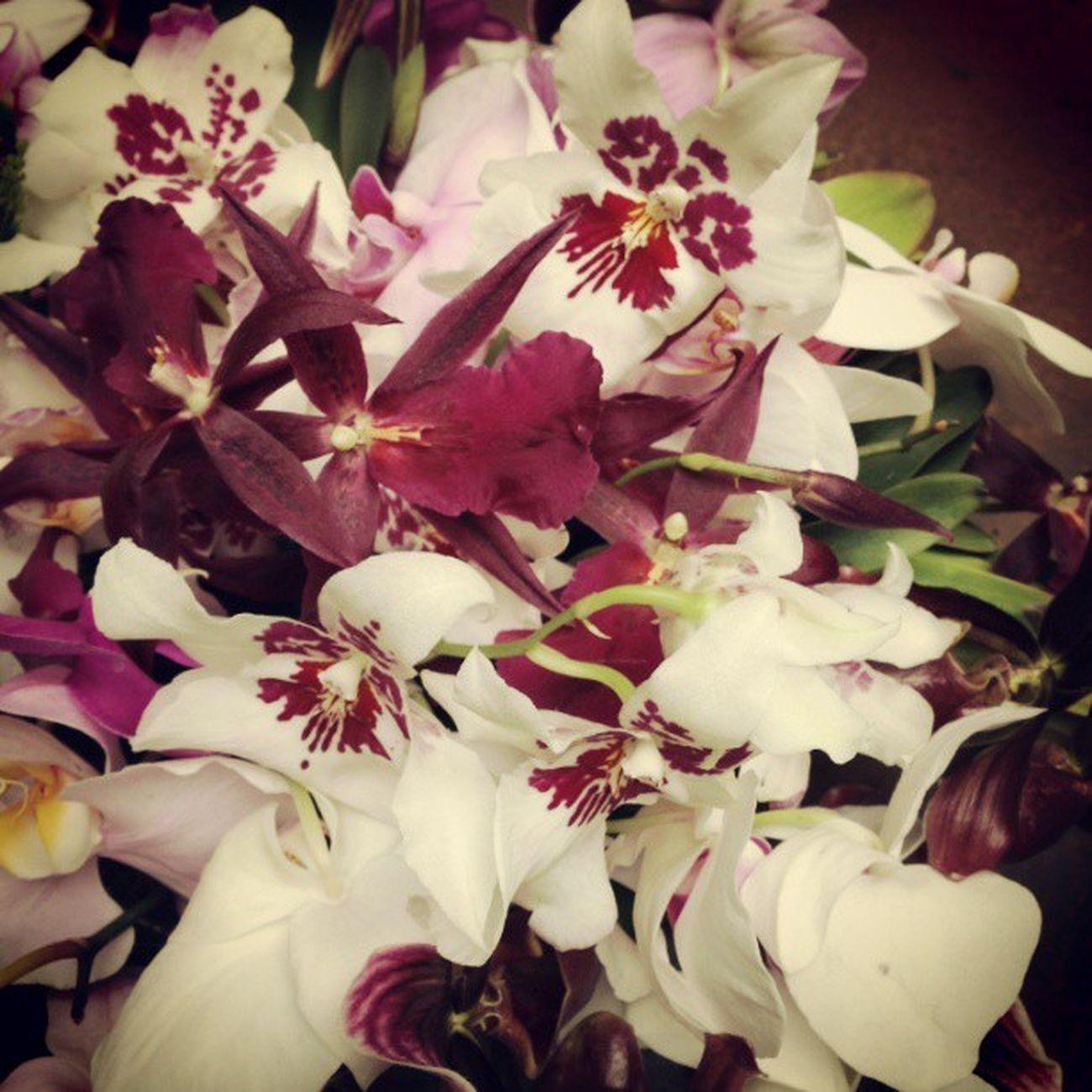 flower, petal, fragility, freshness, white color, flower head, close ...