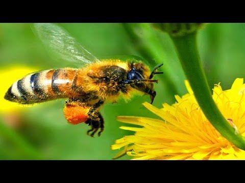 Neuvěřitelné vlastnosti včel Úžasný dokument CZ HD - YouTube
