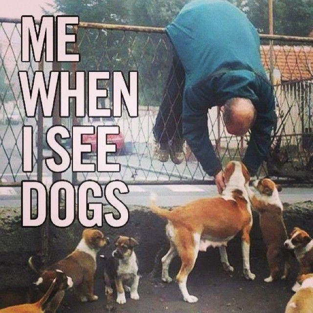 Decatur, AL in Alabama | fashion | Funny animals, Dogs
