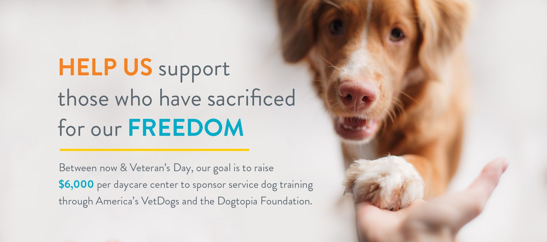 foundation hero image 6K in 6M Service dog training