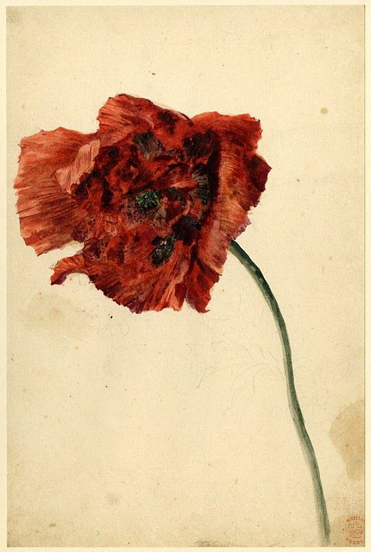 A Poppy, by Jan van Huysum