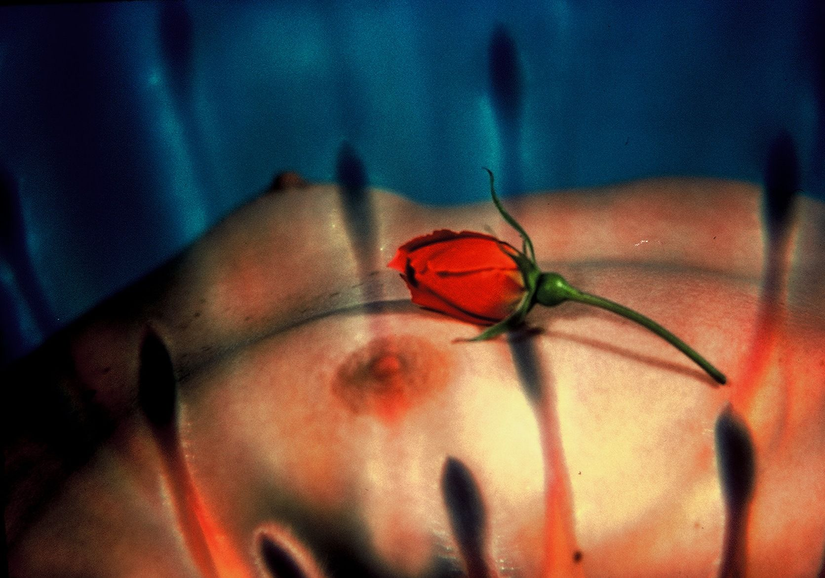 Rosebud Photo by Chuck Dean