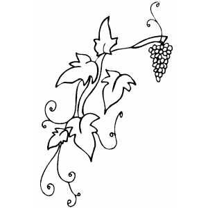 Grapevine Grape Drawing Vine Drawing Fruit Coloring Pages