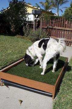 Diy Draining Patio Dog Potty Petdiys Com Dog Potty Patch Dog Potty Area Dog Potty