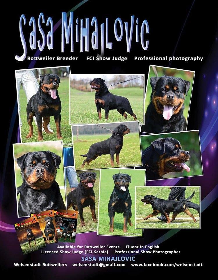 Sasa Mihajlovic Weisenstadt Rottweilers Serbia Fci Licensed Conformation Judge Serbia Professional Photographer Rottw Rottweiler Rottweiler Breeders Stud Dog